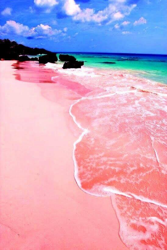The Pink Beach in Bermuda