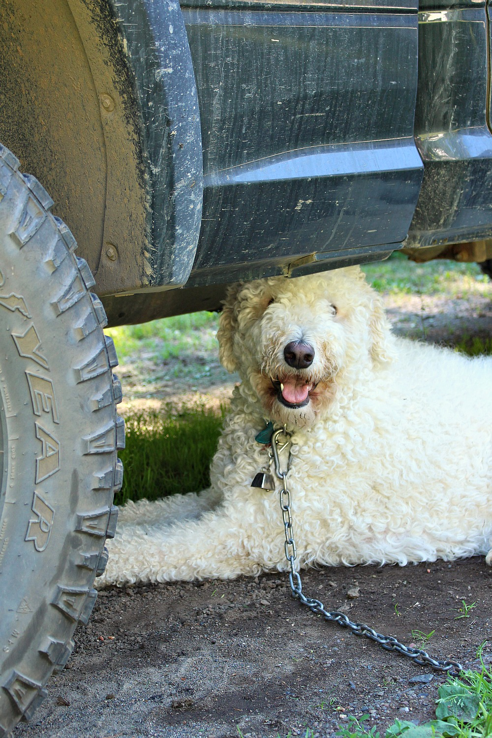 Dog Hiding Under Truck to Keep Cool  | How to Keep a Dog Cool in the Summer (www.danslelakehouse.com)