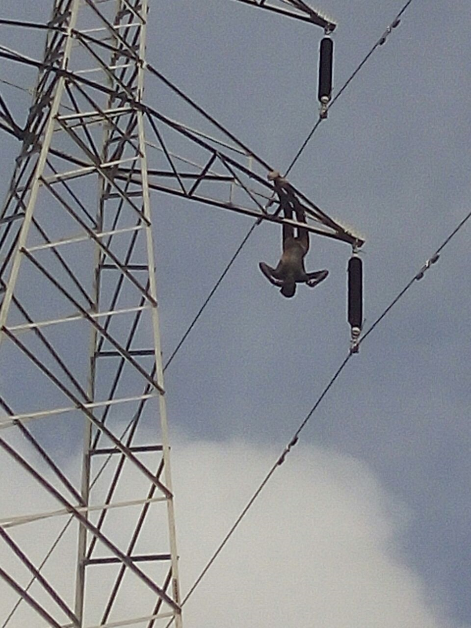 HIGH TENSION WIRE ELETROCUTES CABLE VANDAL | CKN News