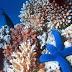 Gás carbônico e acidez dos mares