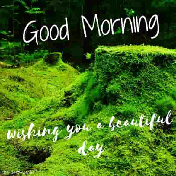 good morning with forest moss nature lush green