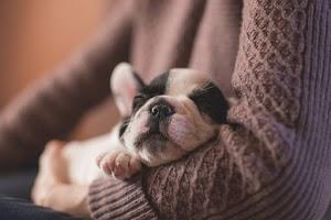 10 lời khuyên an toàn mùa hè hàng đầu của chúng tôi dành cho chó