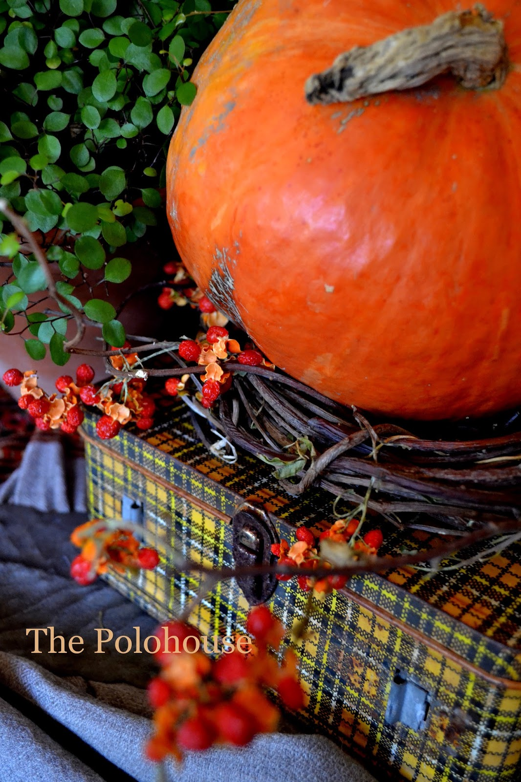 The Polohouse: Fall vignettes