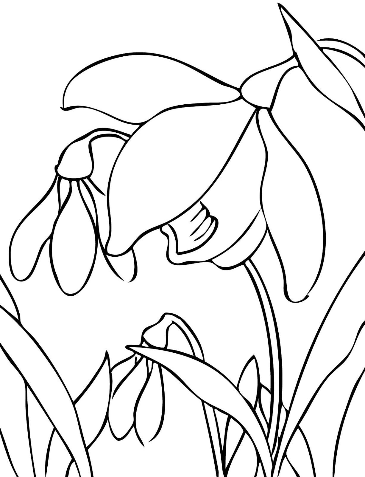Раскраски деткам: Раскраски о весне - подснежники