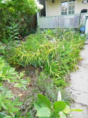 Toronto The Pocket front garden cleanup before Paul Jung Gardening Services