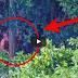 (VIDEO) Gempar.. ! Jurugambar ini Tak Sengaja Menangkap Pemandangan yang Mengejutkan di Pedalaman Sebuah Hutan..