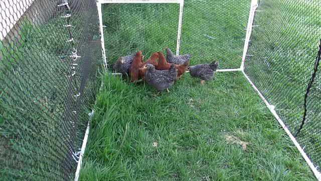 Beberapa Jenis Kandang Ayam yang Sering digunakan Oleh Peternak
