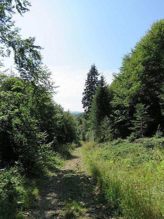 Zejście do doliny potoku Cerkiewnego.
