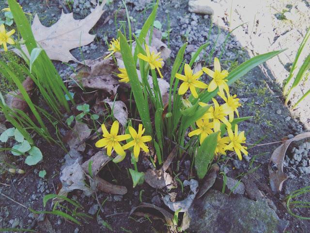 Leśne wędrówki w poszukiwaniu wiosny