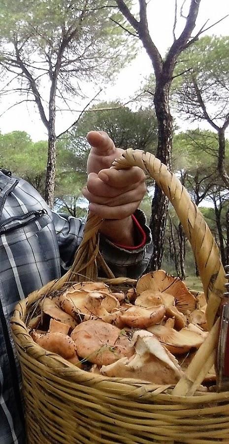 rebullones_tortilla