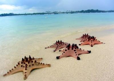 Wisata Pantai Pulau Pasir Menakjubkan
