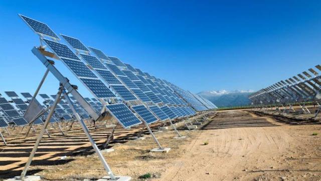 دراسة توصلت لأن النباتات مثلت حوالي 50% من مصادر الطاقة المتجددة في 2014