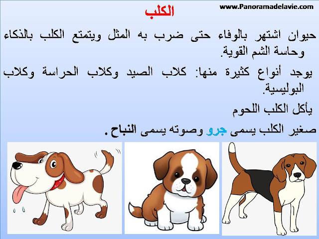 الحيوانات الأليفة - صور