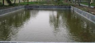 cara budidaya ikan bandeng tambak,cara budidaya ikan bandeng di kolam terpal,pakan ikan bandeng tambak,budidaya ikan bandeng air tawar,budidaya ikan bandeng di tambak,budidaya bandeng intensif,