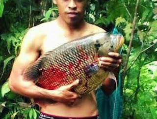 Ternak ikan konsumsi yang mudah dan menguntungkan