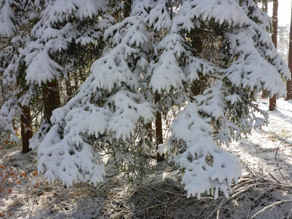 Ёлка, снег, ветки