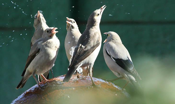 A, Bilimsel, din, islamiyet, Köpeklerin ezan okunurken havlaması-uluması,Kuşlar su içerken Allah'a şükür mü ediyor?,Kuşlar su içerken,Allah'ı tespih eden hayvan geyikleri,Köpek kulağı