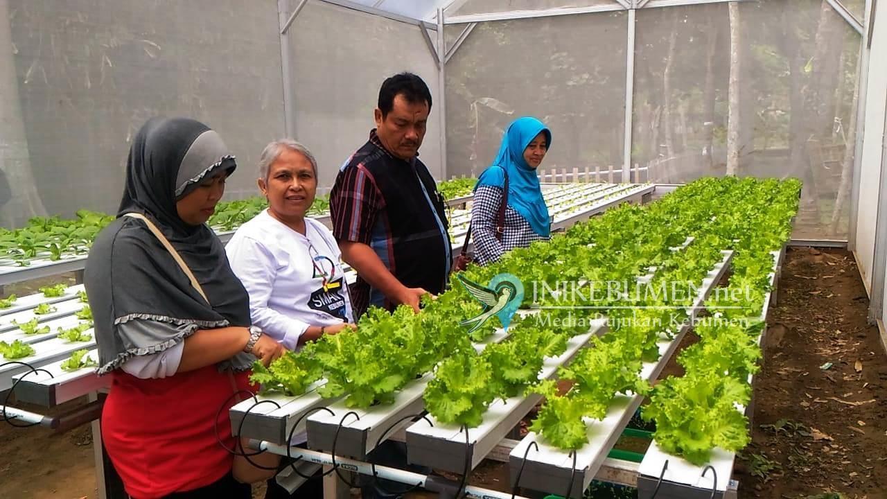 Kelurahan Kebumen Gagas Pasar Sayuran Hidroponik di Pereng Lukulo