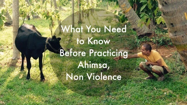 What You Need to Know Before Practicing Ahimsa