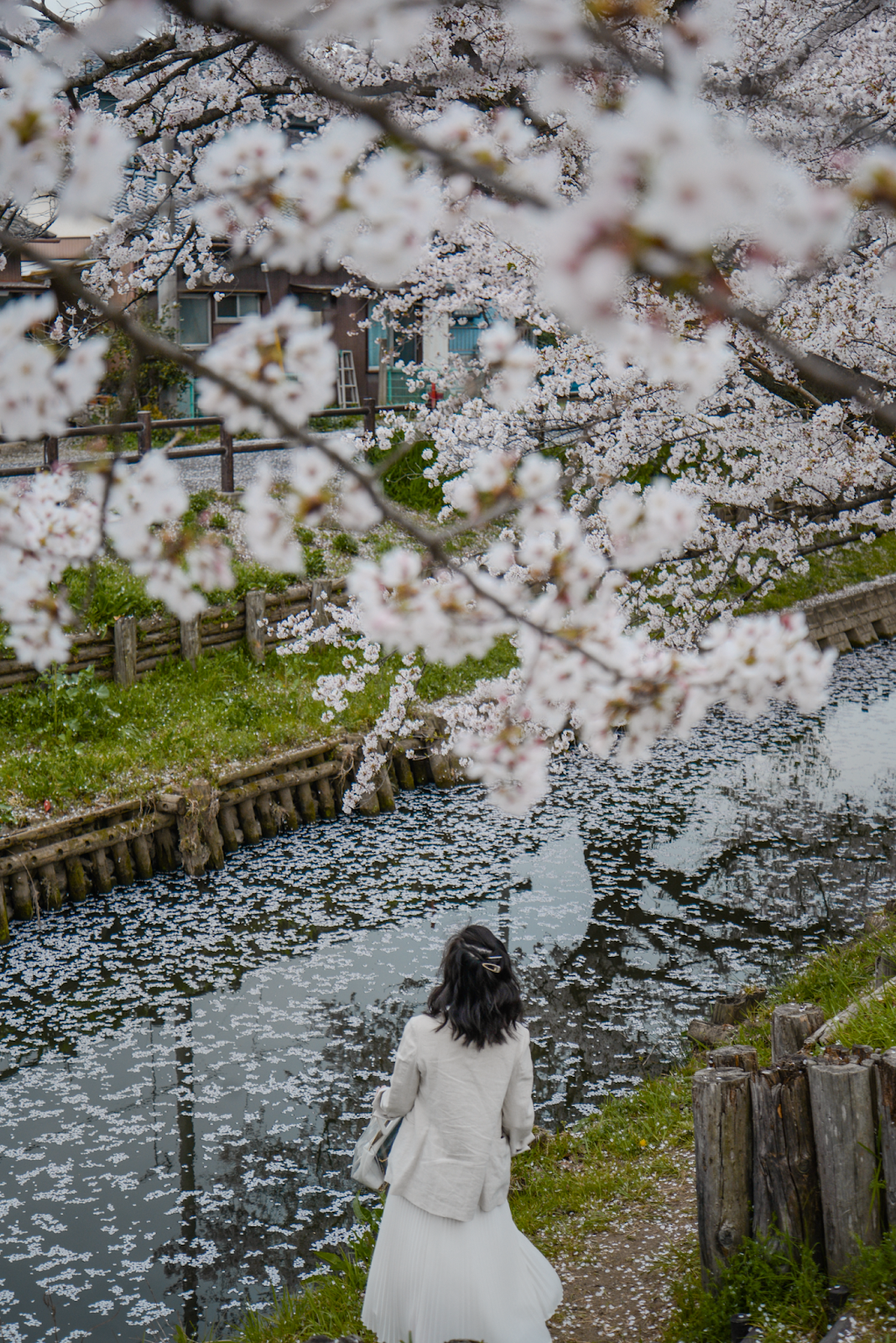 Cherry blossom photo ideas, Tokyo's Not So Secret Cherry Blossoms Spots That You Might Not Know Of - Style and Travel Blogger Van Le (FOREVERVANNY.com)