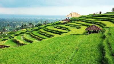 Melihat Kehebatan Pertanian Organik Di Bali