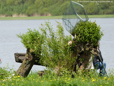 Angeln, Angler, Hamburg, Elbe