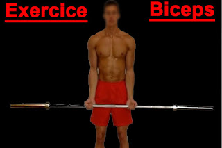 exercice-biceps