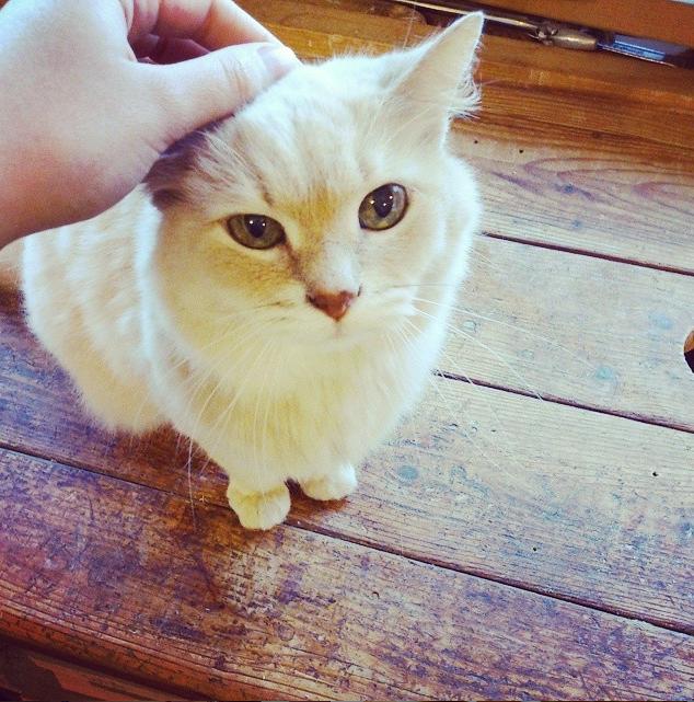 Wido Piddy, the Ever Kitten