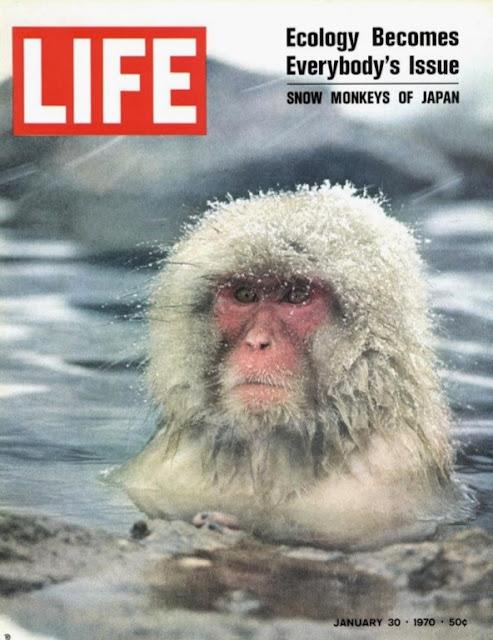 温泉に入る猿が名物の地獄谷野猿公苑。猿が温泉に入ってない?なぜ?【t】