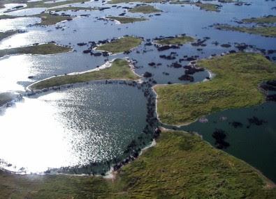 Pantanal pode ter temperaturas elevadas em 7º C até 2100