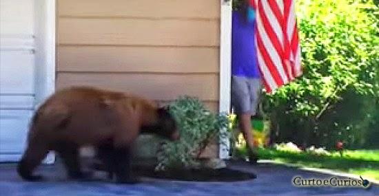 Um urso e um homem se encontram sem querer -  quem se assustou mais.jpg