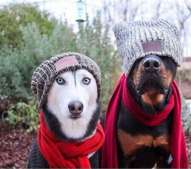 Cute dogs - part 197, cute dog image, best funny dog picture