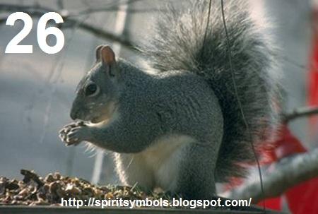 spirit symbols squirrel