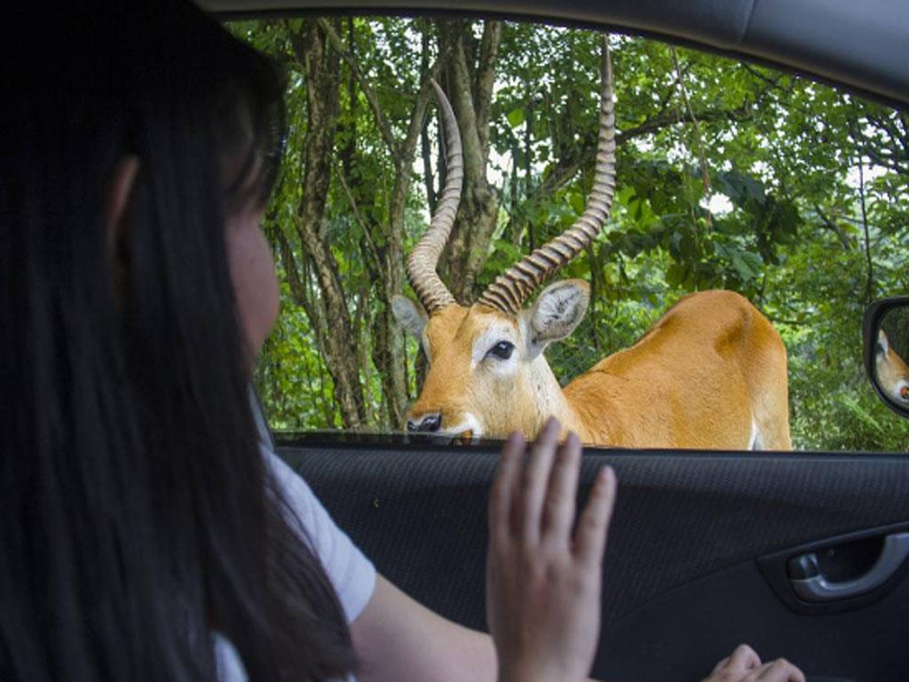 Harga Tiket Masuk Taman Safari Prigen Pasuruan Terbaru 2018 Harga