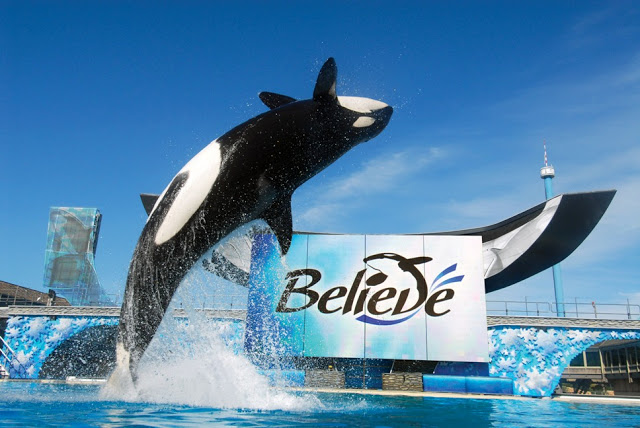 Animals de show Believe