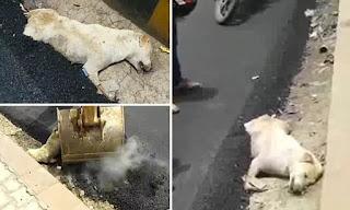 Άνθρωποι ασφαλτόστρωσαν σκύλο που κοιμόταν και τον έκαναν δρόμο