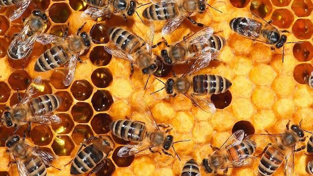 Καλή η φετινή παραγωγή μελιού στην Κοζάνη