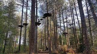 Go Ape flatforms in the trees in the New Forest