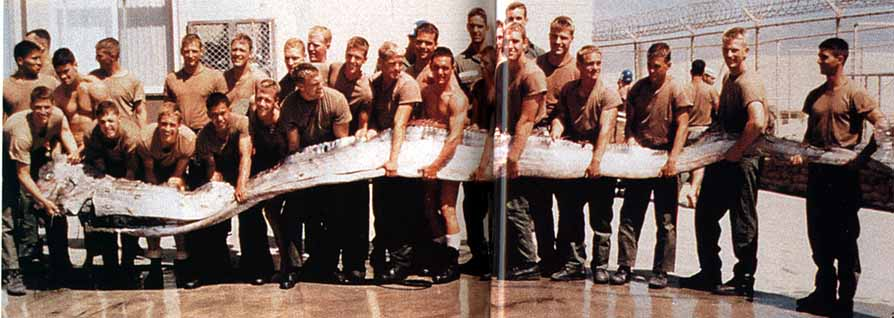 Real Monstrosities: King of Herrings Oarfish 56 Ft
