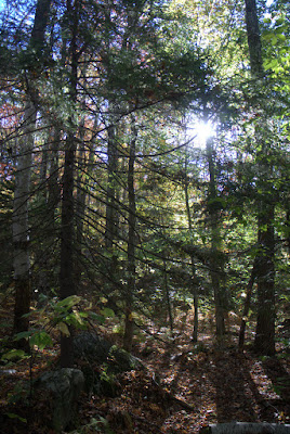 Trees along the M-M Trail at the base of Mt. Monadnock