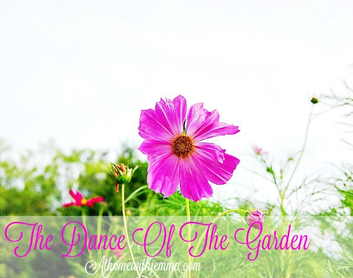 The Dance Of The Garden & Gardening Tips
