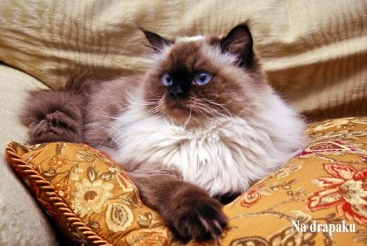 Jak przyzwyczaić kota do nowego legowiska?