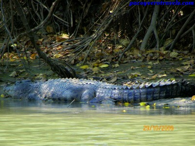Excursion al East Alligator River de Australia