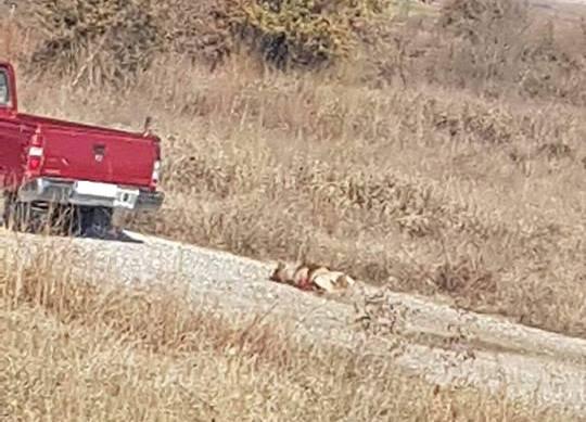 Εικόνες ΝΤΡΟΠΗΣ σε χωριό της Λάρισας - Ανεγκέφαλος έδεσε σκυλί στο αγροτικό και το έσερνε στο δρόμο !!!