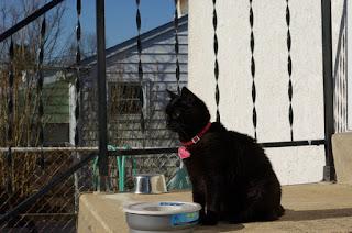 Chilipepper enjoying the spring sunshine.