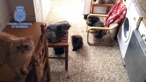 ¡Detenidos! El matrimonio que maltrataba a perros y gatos