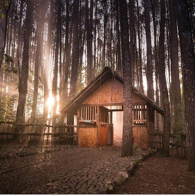 Tempat wisata Hutan Pinus Mangunan Yogyakarta