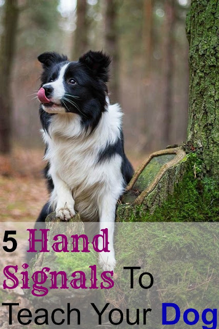 5 Hand Signals To Teach Your Dog