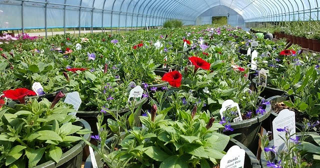 How To Start A Plant Nursery Business In India Wishi Site