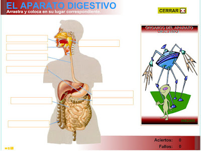 http://www3.gobiernodecanarias.org/medusa/eltanquematematico/pizarradigital/AparatoDigestivo/organos/a_digestivo_ep.html